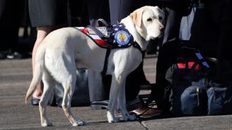 Кучето на Джордж Буш-старши постъпи на нова служба