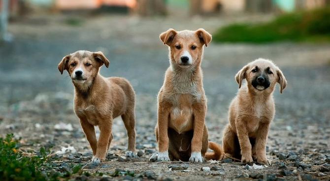 Общинският приют за безстопанствени животни в Търговище получи 300 кг