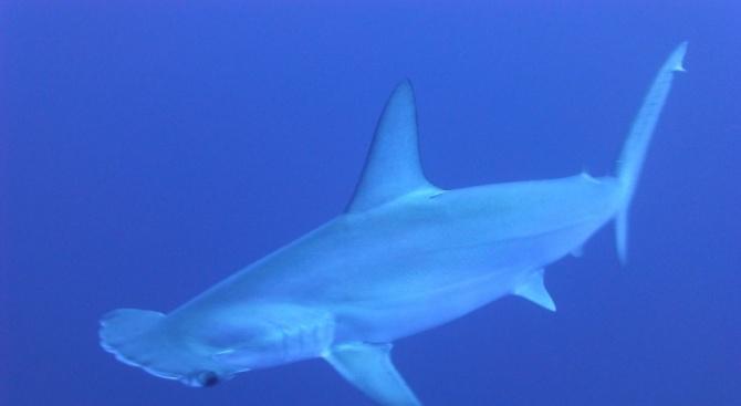 Учени откриха място край остров Санта Крус от архипелага Галапагос,