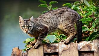 Община Пловдив подпомага кастрацията на домашни кучета и котки