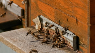 "Кошер с ключ срещу крадци - сред иновациите на ""Пчеломания"""