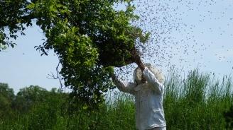 Пчелари се надяват да няма нова студена вълна