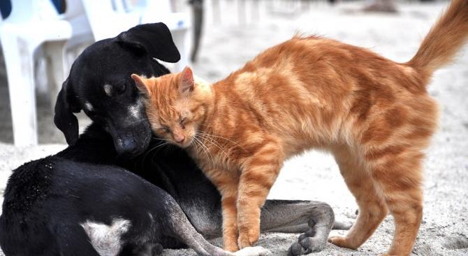 Безплатна кастрация на котки и кучета в Сливен