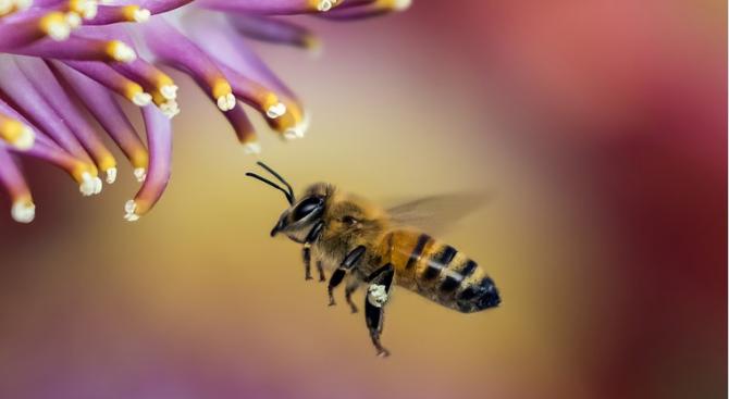 Бюджет от 6,4 млн. лв. годишно за пчеларство в Новата програма за периода 2020-2022 г.