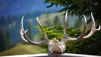 70 ловни трофея задържаха горски служители