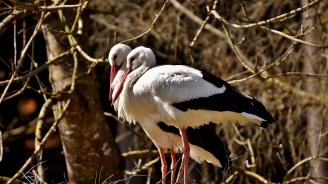 Съветници в Бургас искат поставянето на десет изкуствени гнезда за бели щъркели