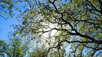 Разкрасяват Варна с нови дръвчета и храсти