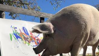 Картините на прасе-художник достигат цена от 4000 долара