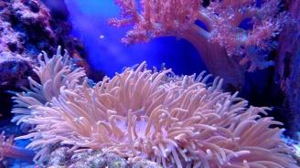 Учени откриха коралов риф край Италия