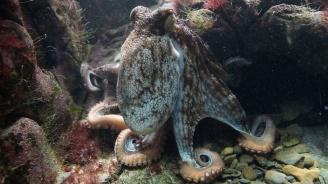 Октоподите променят цвета си по време на сън