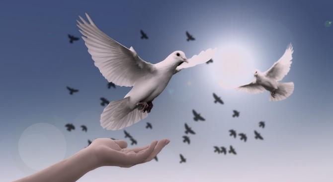 Отгледан в Белгия пощенски гълъб бе продаден за над 1,25