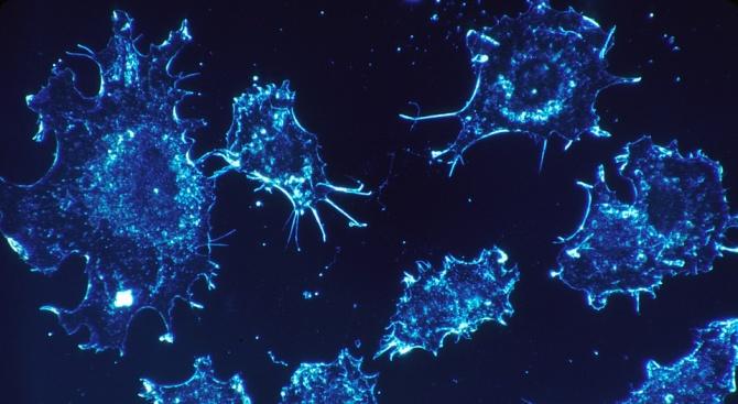 Раковите заболявания ще отнемат живота на около 1,41 млн. души