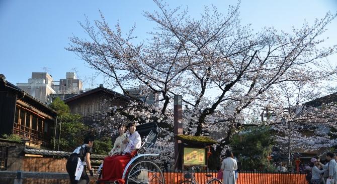 В Япония започна сезонът на цъфтежа на вишните сакура. Температурите