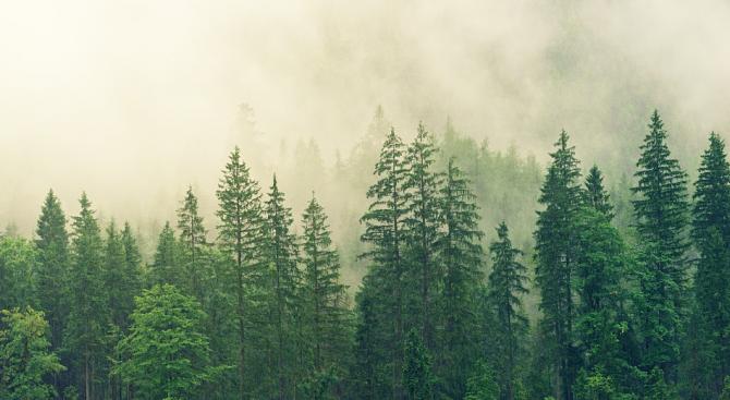 Горите са сред най-значимите природни богатства, с които разполагаме. Освен