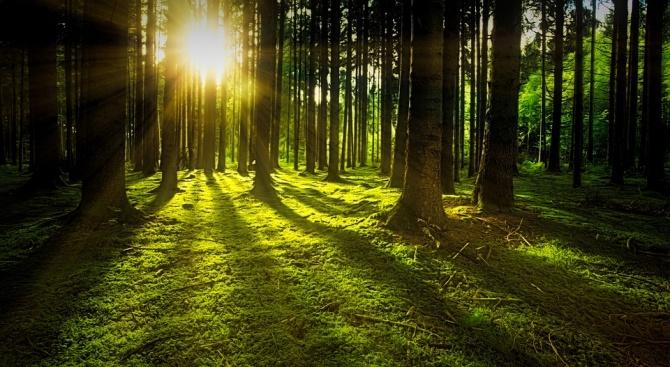 """По случай днешния Международен ден на горите британският в. """"Дейли"""