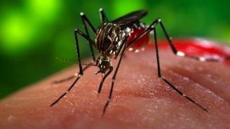 Бразилски учени създадоха експресен тест за определяне на вируса зика