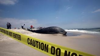 Откриха 40 килограма пластмаса в мъртъв кит