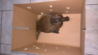 РИОСВ-Бургас спаси защитен вид птица