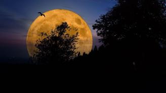 Утре вечер ще станем свидетели на Червеева Супер Луна