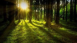 Интересни факти за горите