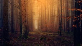 Откриха 9-годишно дете, изгубило се в гора край Сливен