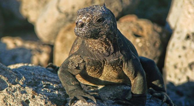 Галапагоските острови са осигурили подслон на най-малко 53 инвазивни вида,