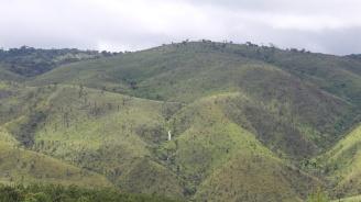 3000 декара гори са засадени на територията на Северното централно държавно предприятие през 2018 г.