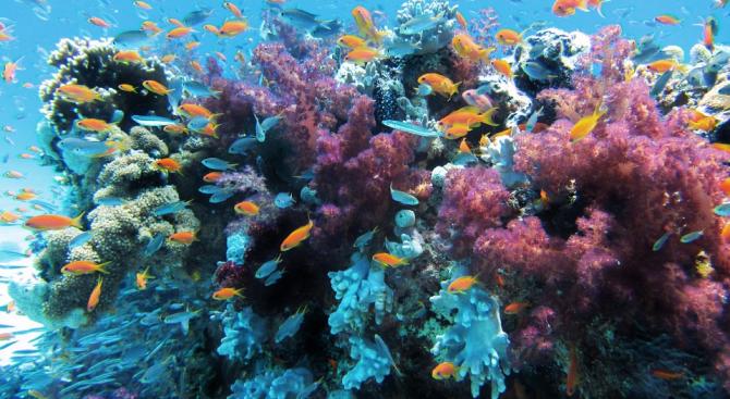 И най-южните корали на планетата са подложени на избелване