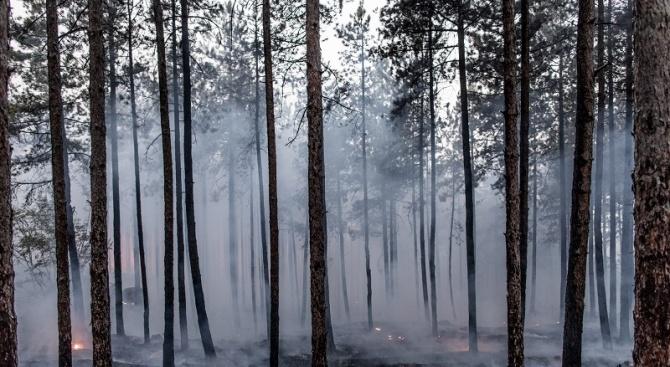 От началото на годината: 500 декара гори от Североизточно държавно предприятие са засегнати от пожари
