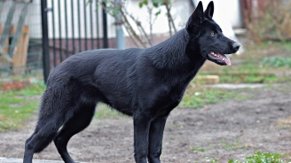 Куче нахапа жестоко 8-годишно дете в Плевен