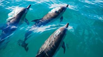Учени прогнозираха измиране на делфините