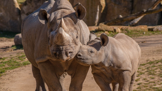 Куче ще защитава от бракониери последните 2 северни бели носорога в света