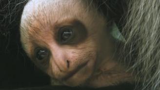 Маймунка от застрашен вид се роди в зоопарка във Виена