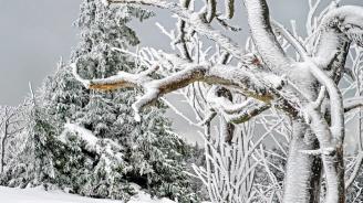 Сняг вали на вр. Снежанка в Пампорово