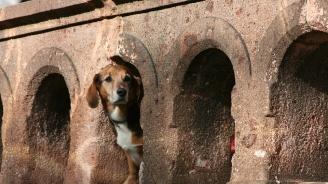 Кучетата подушват рака в 97% от случаите
