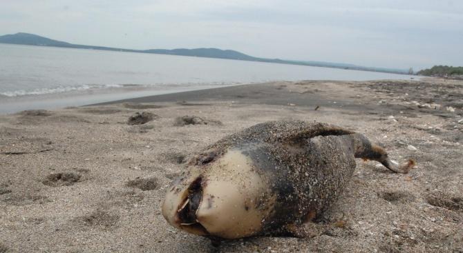 Снимка: Морето изхвърли малко делфинче