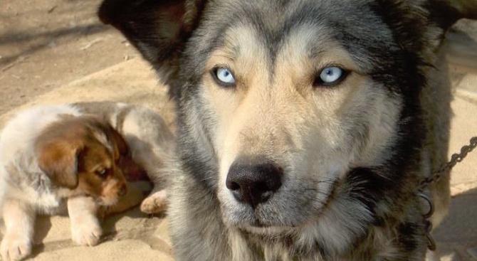 Собственик налага с дървени пръти в продължение на час кучето
