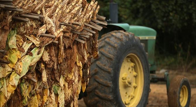 Тютюнопроизводителитеполучиханад 80 млн. лева