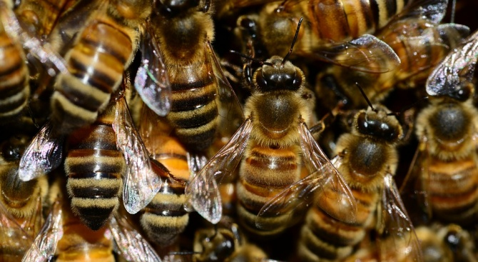 Пчелите на Нотр Дам оцелели по чудо в огнения ад