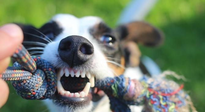 Куче нахапа зверски 3-годишно дете край Кърджали