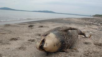 Морето изхвърли малко делфинче