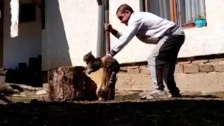 Мъж от Разложко отряза крака на котка с брадва