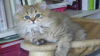 Биолози препоръчват котките да не излизат навън