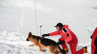 45 години работа със спасителни кучета отбелязва БЧК