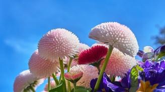 Близо 18 000 цветя са засадени в Шумен