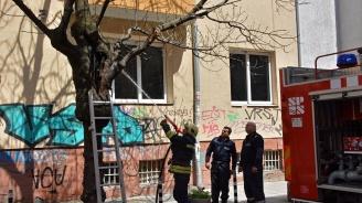 Огнеборци гасиха подпалено дърво пред жилищна кооперация в центъра на София