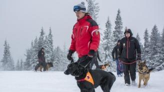 Планинската спасителна служба на БЧК отбелязва 45 години работа със спасителни кучета