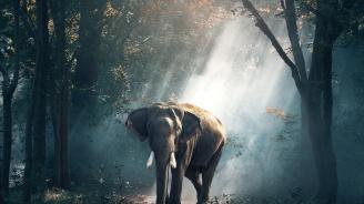Разярен слон уби петима души за една нощ