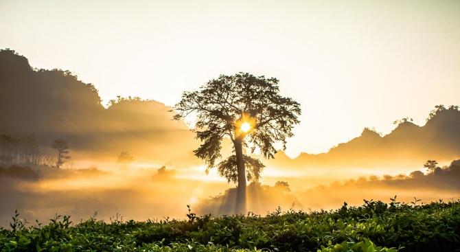 Учени и служители от БАН засадиха 150 дървета за Деня на Земята