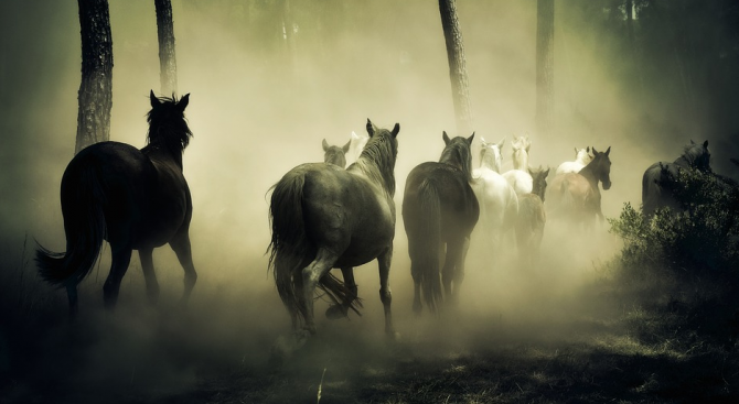 Снимка: Полицаи преследваха коне с автобус